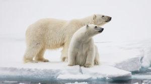 Арктика ждет